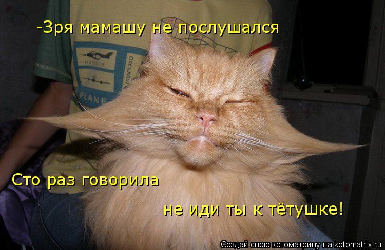 Котоматрица: -Зря мамашу не послушался Сто раз говорила не иди ты к тётушке!