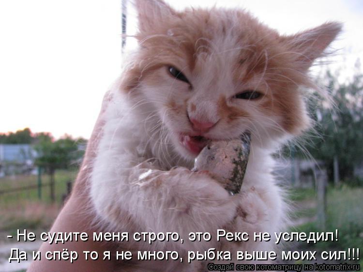 Котоматрица: - Не судите меня строго, это Рекс не уследил! Да и спёр то я не много, рыбка выше моих сил!!!