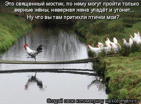 Котоматрица: Это священный мостик, по нему могут пройти только Ну что вы там притихли птички мои? верные жёны, неверная жена упадёт и утонет...