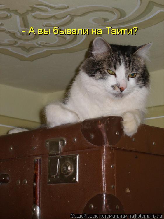 Котоматрица: - А вы бывали на Таити?