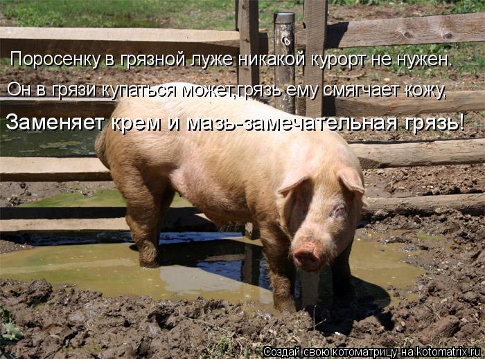 Котоматрица: Поросенку в грязной луже никакой курорт не нужен. Он в грязи купаться может,грязь ему смягчает кожу, Заменяет крем и мазь-замечательная гря
