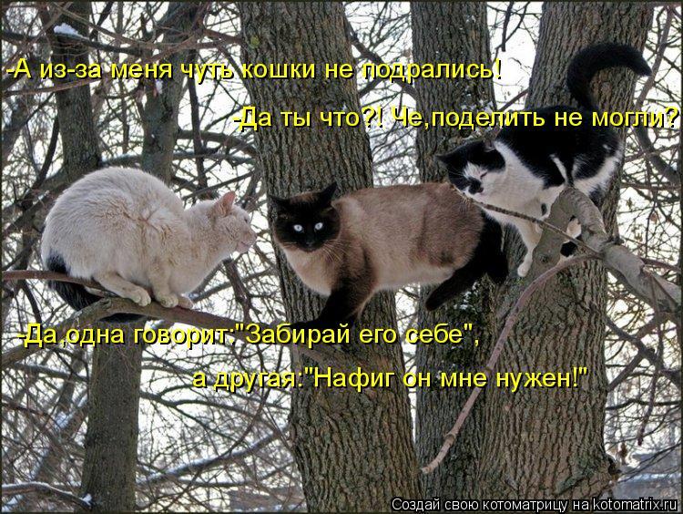 """Котоматрица: -А из-за меня чуть кошки не подрались! -Да ты что?! Че,поделить не могли? -Да,одна говорит:""""Забирай его себе"""",  а другая:""""Нафиг он мне нужен!"""""""