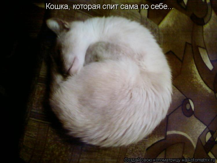 Котоматрица: Кошка, которая спит сама по себе...