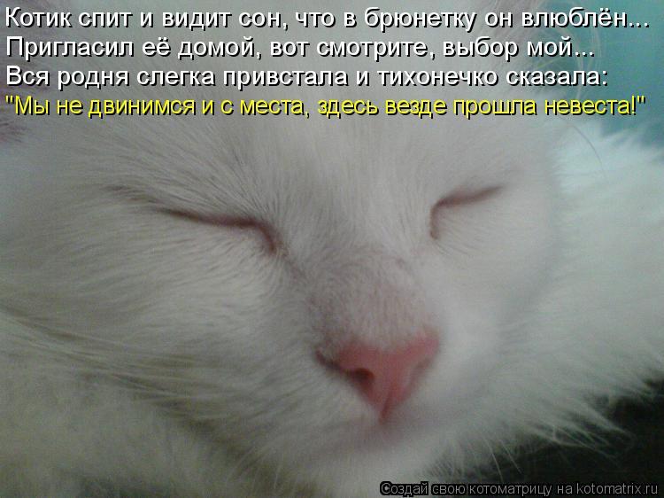 """Котоматрица: Котик спит и видит сон, что в брюнетку он влюблён... Пригласил её домой, вот смотрите, выбор мой... """"Мы не двинимся и с места, здесь везде прошла"""