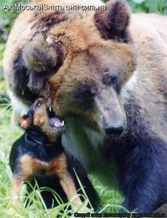 Котоматрица Делить шкуру неубитого медведя - это живодерство!