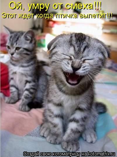 Котоматрица: Ой, умру от смеха!!!  Этот ждет когда птичка вылетит!!!