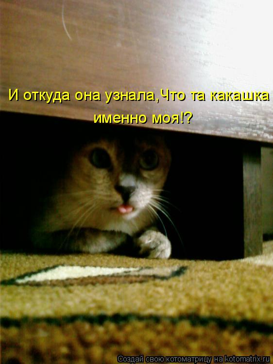 Котоматрица: И откуда она узнала,Что та какашка  именно моя!?
