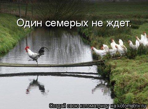 Котоматрица: Один семерых не ждет.