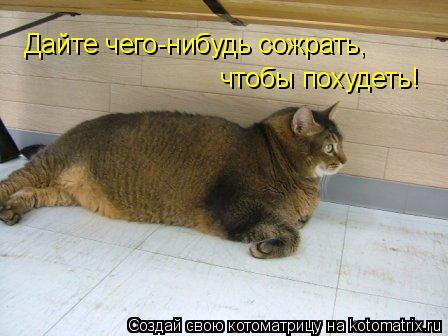 Котоматрица: Дайте чего-нибудь сожрать, чтобы похудеть!