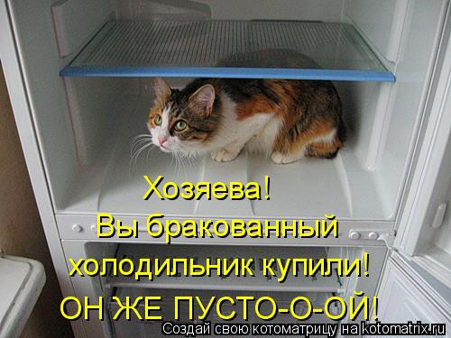Котоматрица: Хозяева!  холодильник купили! ОН ЖЕ ПУСТО-О-ОЙ! Вы бракованный