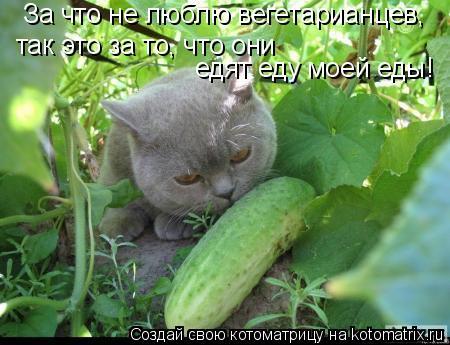 Котоматрица: За что не люблю вегетарианцев,  так это за то, что они  едят еду моей еды!