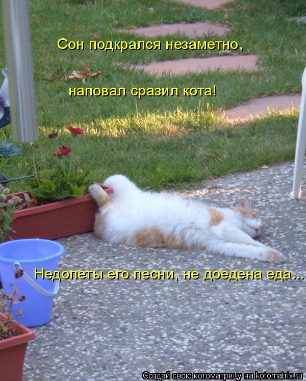 Котоматрица: Сон подкрался незаметно, наповал сразил кота! Недопеты его песни, не доедена еда...