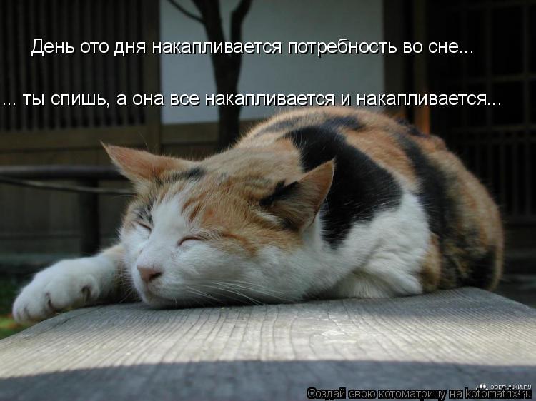 Котоматрица: День ото дня накапливается потребность во сне... ... ты спишь, а она все накапливается и накапливается...