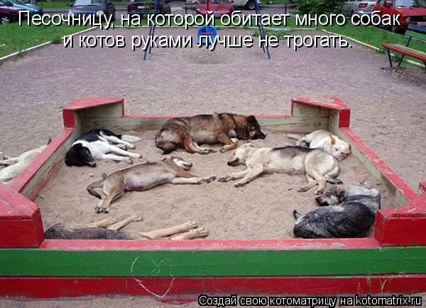 Котоматрица: Песочницу, на которой обитает много собак  и котов руками лучше не трогать.