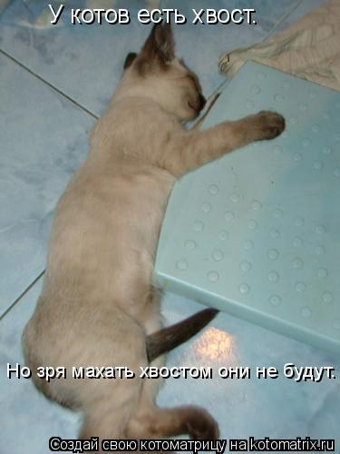 Котоматрица: У котов есть хвост.  Но зря махать хвостом они не будут.