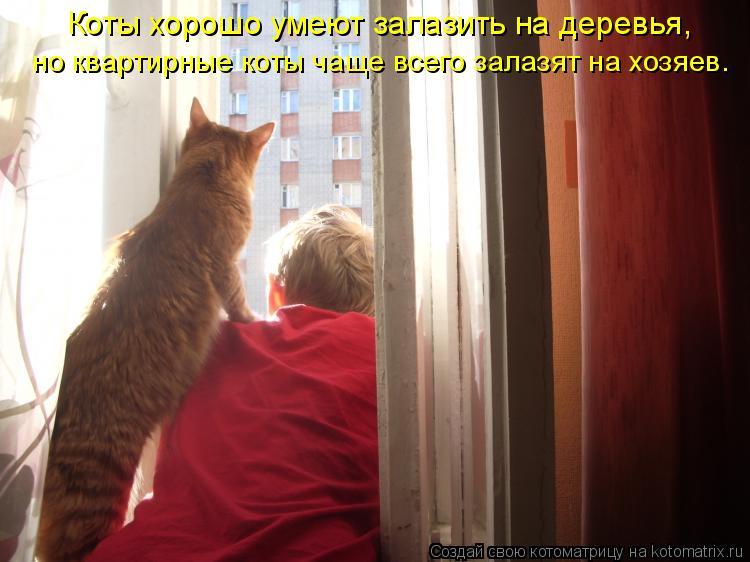 Котоматрица: Коты хорошо умеют залазить на деревья,  но квартирные коты чаще всего залазят на хозяев.