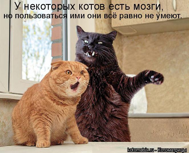 Котоматрица: У некоторых котов есть мозги,  но пользоваться ими они всё равно не умеют.