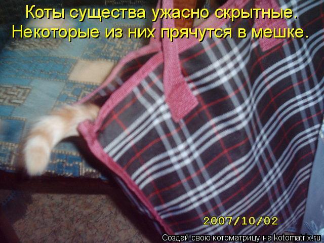 Котоматрица: Коты существа ужасно скрытные.  Некоторые из них прячутся в мешке.