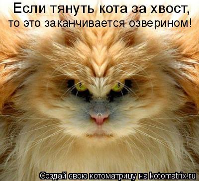 Котоматрица: Если тянуть кота за хвост,  то это заканчивается озверином!
