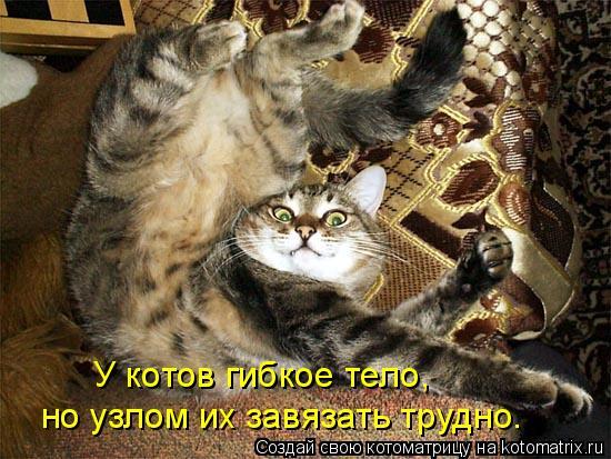Котоматрица: У котов гибкое тело,  но узлом их завязать трудно.