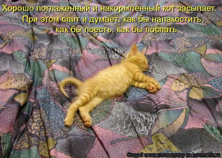 Котоматрица: Хорошо поглаженный и накормленный кот засыпает.    При этом спит и думает: как бы напакостить,  как бы поесть, как бы поспать.