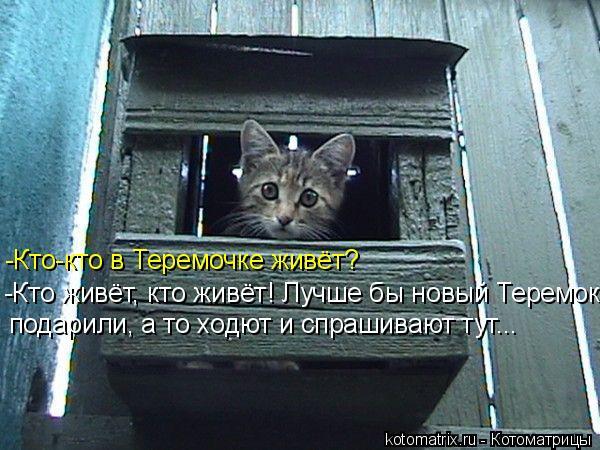 Котоматрица: -Кто-кто в Теремочке живёт? -Кто живёт, кто живёт! Лучше бы новый Теремок  подарили, а то ходют и спрашивают тут...