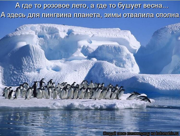 Котоматрица: А где то розовое лето, а где то бушует весна...             А здесь для пингвина планета, зимы отвалила сполна.