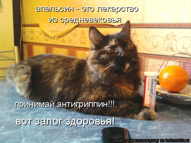 Котоматрица: апельсин - это лекарство из средневековья принимай антигриппин!!! вот залог здоровья!