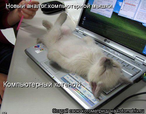 Котоматрица: Новый аналог компьютерной мышки.  Компьютерный котенок!