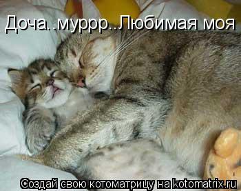 Котоматрица: Доча..муррр..Любимая моя Доча..муррр..Любимая моя