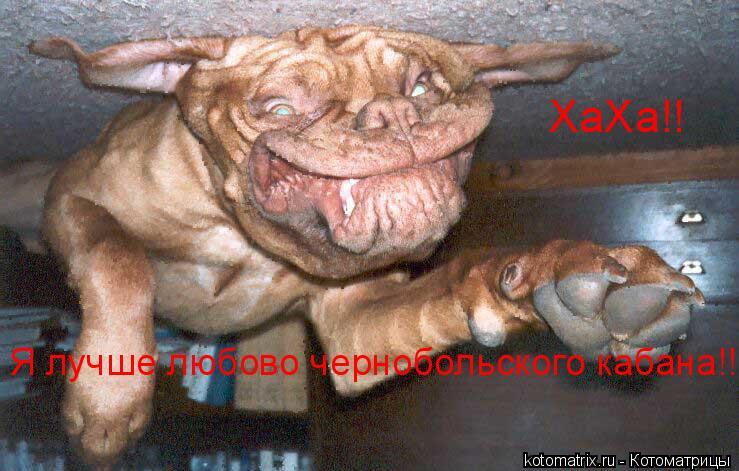 Котоматрица: ХаХа!! Я лучше любово чернобольского кабана!!!