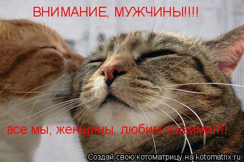 Котоматрица: все мы, женщины, любим ушаими!!!! ВНИМАНИЕ, МУЖЧИНЫ!!!!