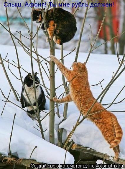 Котоматрица: Слыш, Афоня! Ты мне рубль должен!