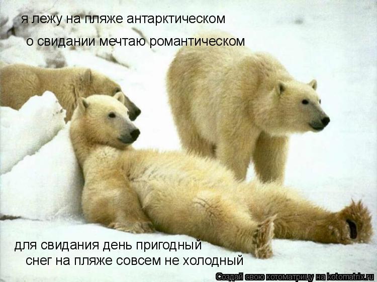Котоматрица: я лежу на пляже антарктическом о свидании мечтаю романтическом для свидания день пригодный снег на пляже совсем не холодный