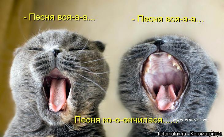 Котоматрица: Песня ко-о-ончилася...... - Песня вся-а-а... - Песня вся-а-а...
