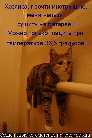 Котоматрица: Хозяйка, прочти инструкцию, меня нельзя  сушить на батарее!!! Можно только гладить при  температуре 36,5 градусов!!!