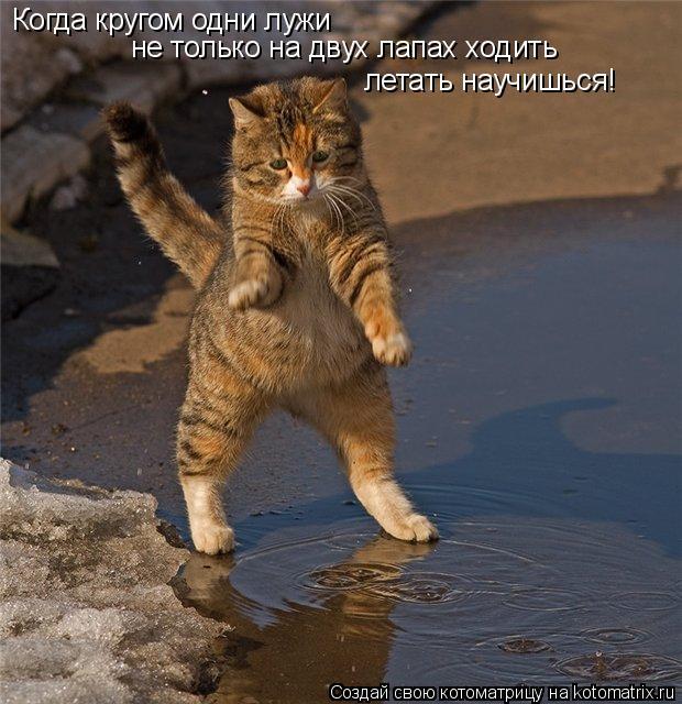 Котоматрица: Когда кругом одни лужи  не только на двух лапах ходить летать научишься!