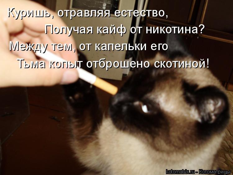 Котоматрица: Куришь, отравляя естество, Получая кайф от никотина? Между тем, от капельки его  Тьма копыт отброшено скотиной!