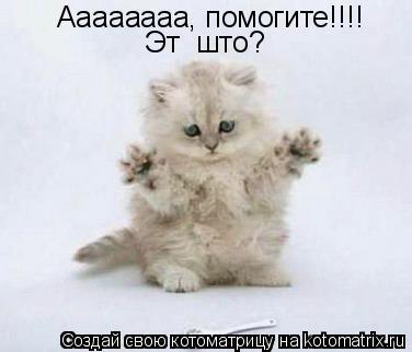 Котоматрица: Аааааааа, помогите!!!! Эт  што?