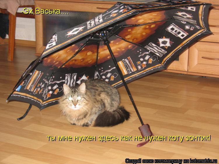 Котоматрица: -Эх,Васька.... ты мне нужен здесь как не нужен коту зонтик!