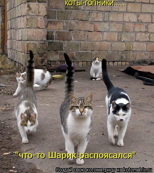 """Котоматрица: коты-гопники..... """"что-то Шарик распоясался"""""""