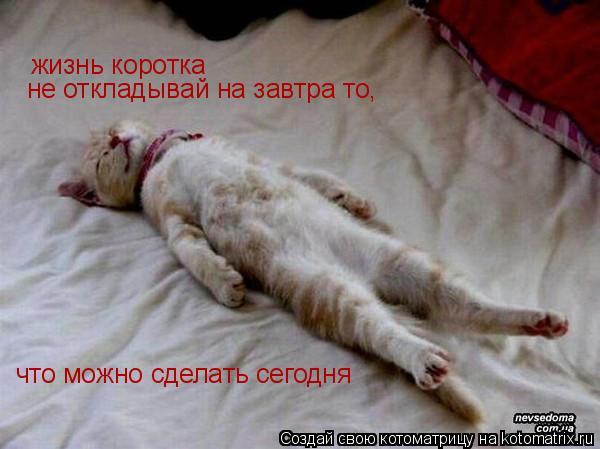 Котоматрица: жизнь коротка не откладывай на завтра то, что можно сделать сегодня