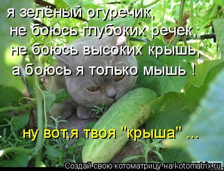 """Котоматрица: я зелёный огуречик, не боюсь глубоких речек, не боюсь высоких крышь, а боюсь я только мышь ! ну вот,я твоя """"крыша"""" ..."""