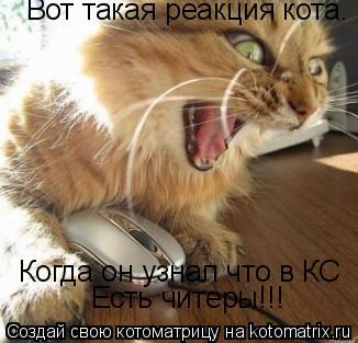 Котоматрица: Вот такая реакция кота. Когда он узнал что в КС Есть читеры!!!