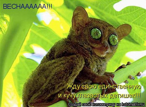 Котоматрица: ВЕСНАААААА!!! Жду свою единственную и кучу глазастых детишек!!!