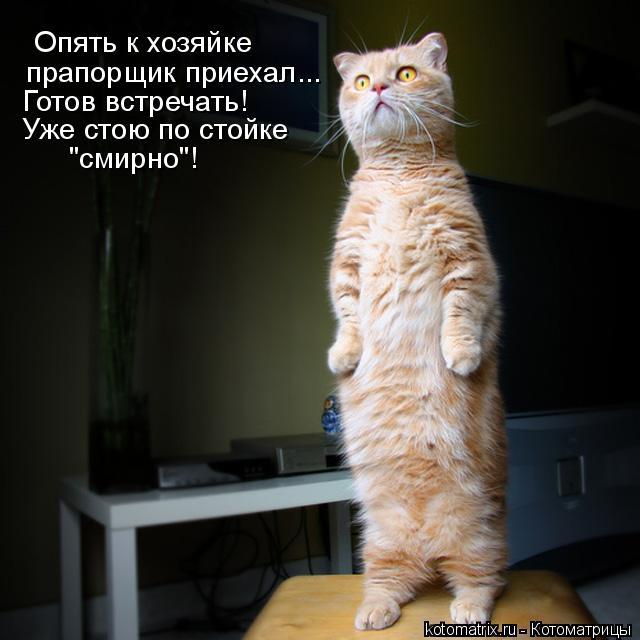 """Котоматрица: Опять к хозяйке  прапорщик приехал... Готов встречать! Уже стою по стойке """"смирно""""!"""