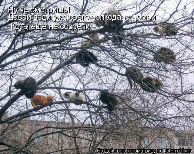 Котоматрица: Ну че смотришь! Давай веди уже свего волкодава домой Коты еще не созрели!