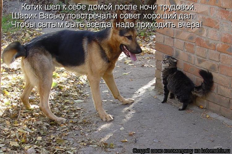 Котоматрица: Котик шел к себе домой после ночи трудовой. Шарик Ваську повстречал и совет хороший дал: Чтобы сытым быть всегда, надо приходить вчера!
