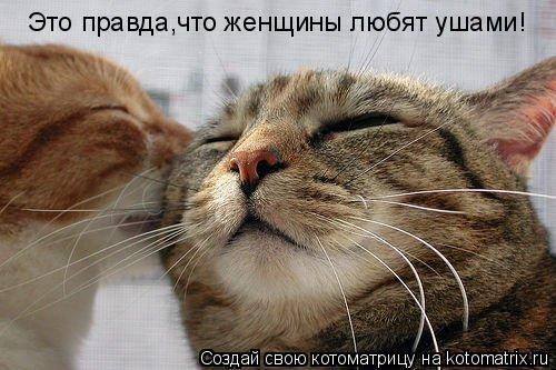Котоматрица: Это правда,что женщины любят ушами!