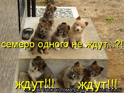 Котоматрица: семеро одного не ждут...?! ждут!!! ждут!!!